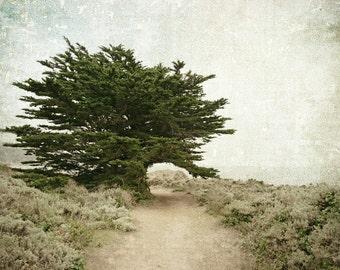 Tree Photography, Landscape, Cypress Trees, California Coast, Nature Photo, Monterey, Fine Art Print, Sage Green, Cream, Rustic Decor