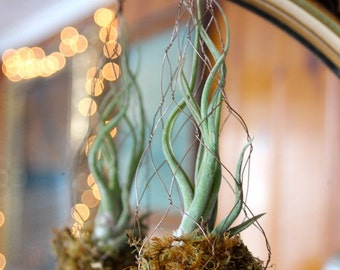 Long copper air plant hanger