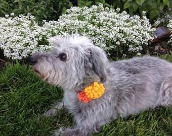 Yellow and Orange Felt Flowers Dog Collar Accessory