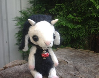 Black and white teddy goat