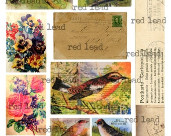 "Digital Bird Collage Sheet - 8-1/2"" x 11"" - Bird 38"