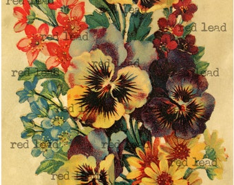 Antique Print - Old Fashioned Pansy Garden Bouquet - Digital Download Vintage Flower Garden Print