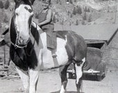 vintage photo Little Boy in Beanie Hat Overalls Rides Horse Pony w Camera Bag on Saddle