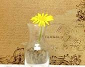 Small Glass Vase, Flower Vases, Beach Wedding, Bud Vase, Vase for hanging, Bridal Shower, Rustic Wedding, Garden Wedding