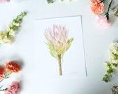 Protea - 8x10 print