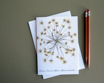 Queen Anne's Lace flower, single bloom, pressed flower greeting card, no.1021