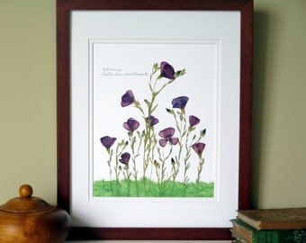 Pressed flowers art print, 11x14 double matted, dark purple Winecup wildflowers, wall decor no. 0023