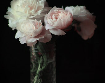 Floral Still Life  Photography Jar of  Pink Peonies