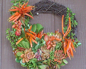 Sunshine Color 13 inch SPECIAL Willow Branches Growing Succulent Plant Living Wreath