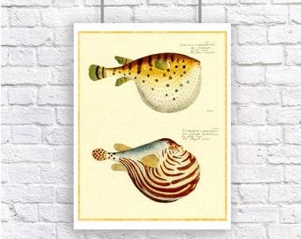 Pufferfish Blowfish Nautical Vintage Style Large Art Print Beach House Decor Yellow Orange Gold puffer fish