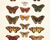 Vintage Butterfly Series Plate No. 2 - Giclee Canvas Art Print - Print - Poster - Canvas Wall Hanging - Natural History Art - Wall Decor