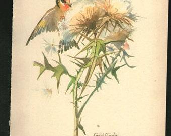Antique Print Lithograph English Wild Birds Thistle Edwardian chart wall art vintage color lithograph illustration 1970 garden