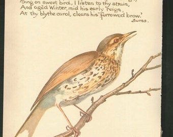 Antique Print Lithograph English Wild Birds Song Thrush Edwardian chart wall art vintage color lithograph illustration 1970 garden