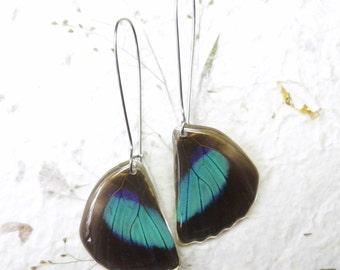 Real Butterfly Earrings. Rare Prepona omphale in Resin Earrings. Nature Jewelry. White Butterfly Earrings. Stainless Steel.