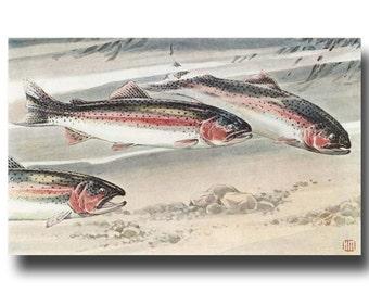 "Rainbow Trout Print (Vintage Trout Art, 1930s Fishing Gift for Women) --- ""Rainbow & Steelhead Trout"" No. 273"