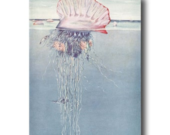 "Jellyfish Art, Jellyfish Print, 1930s Ocean Art --- ""Portuguese Man-of-War"" No. 310"