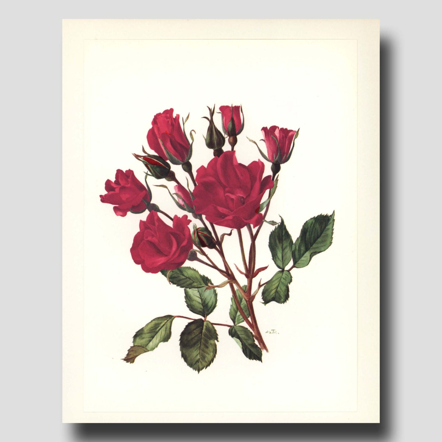 Wall Art Red Flower : Rose decor red flower wall art s by paragonvintageprints