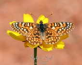 Beautiful Butterfly Wall Art, nature photography, rustic home decor, fine art butterfly photo print, Symmetry