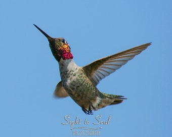 Hummingbird Photography, nature wall art, humming bird photo, animal photography, bird print