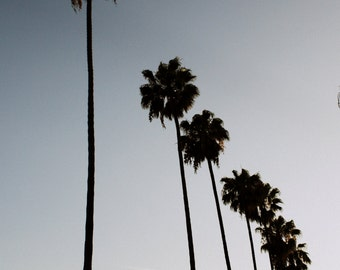 Los Angeles Photography, Hollywood Palm Trees. L.A. Photograph Print. Black & White with hue. Los Angeles Photography. Home Decor Wall Art