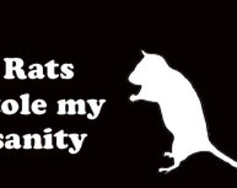 Rats Stole My Sanity