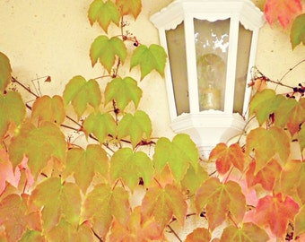 Autumn Vines and Light, France Photography, Autumn, Travel Photography, Art Print, Wall Decor
