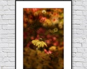 Floral wall art, flower photography, colorful, summer decor, wall decor print, nature photography, home decor print, photo print, yellow red
