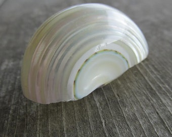 Gorgeous Mother of Pearl Shell Scarf Slide Ring