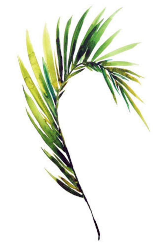 Fine art print Palm frond tropical leaf art by ...