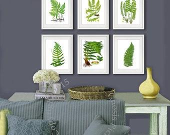 Fern wall art set of 6 Fern wall decor prints Unframed Green Nature Botanical fern Prints