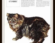 Cat Art Print, Cymric, 1980s Italian Illustration, Vintage Book Plate, 9.5 x 11 Inches, Ready to Frame