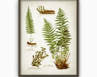 Fern Green Antique Botanical Art Print - Vintage Botanical Home Decor - Antique Book Plate Illustration - Giclee Forest Fern Picture (AB36)