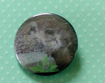 Groundhog Button Chubby Woodchuck Groundhog Marmot Closeup- Pinback Button - Original Photo