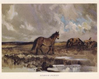 Exmoor Ponies Horse equine print Lionel Edwards vintage print native British breed pony
