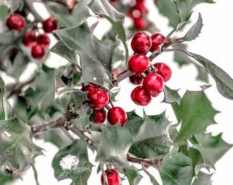 Holly Print, Christmas Print, Christmas Season, Christmas Art, Christmas Decor, Red Holly