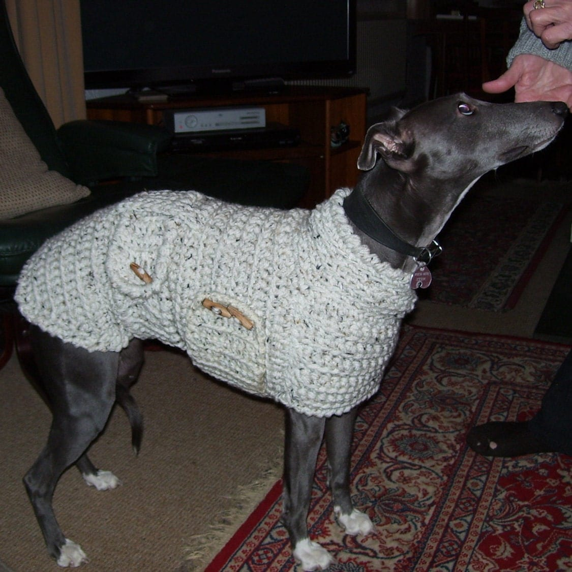 Knitting Pattern For Whippet Coat : Whippet Sweater Whippet Pullover Whippet Coat Whippet Clothing