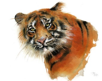 Tiger watercolor painting. Art Print. Nature or Animal Illustration. Wildlife watercolor animal illustration.
