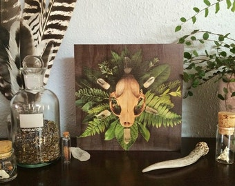 The Bone Collector - A Wood Panel Art Photo
