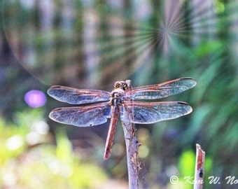 Dragonfly art Dragonfly wall art Macro photography Dragonfly print Insect art Dragonfly photos Dragonflies Dragonfly photo Insect wall art