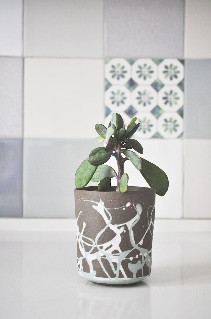 Plant Pot Cactus Planter Succulent Planter Succulent Pot
