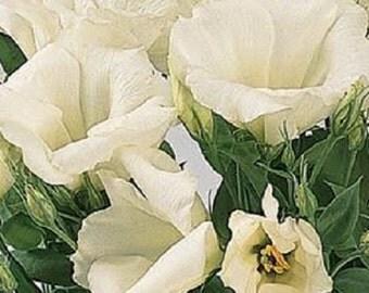 50 Seeds Lisianthus Forever White Forever White Lisianthus