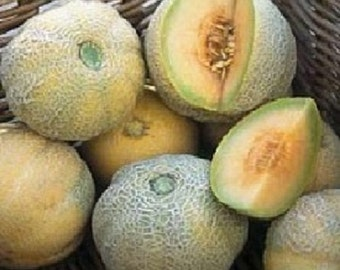 100 Seeds Cantaloupe Minnesota Midget Small Fruit