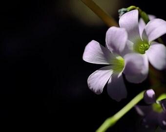 Brazilian Butterfly Flower