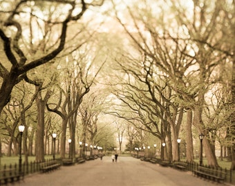 New York City Print, Large Wall Art, NYC Wall Art, New York Art, Autumn Photography, Trees, Woods, Gold, Central Park Photo, Branches, Fall