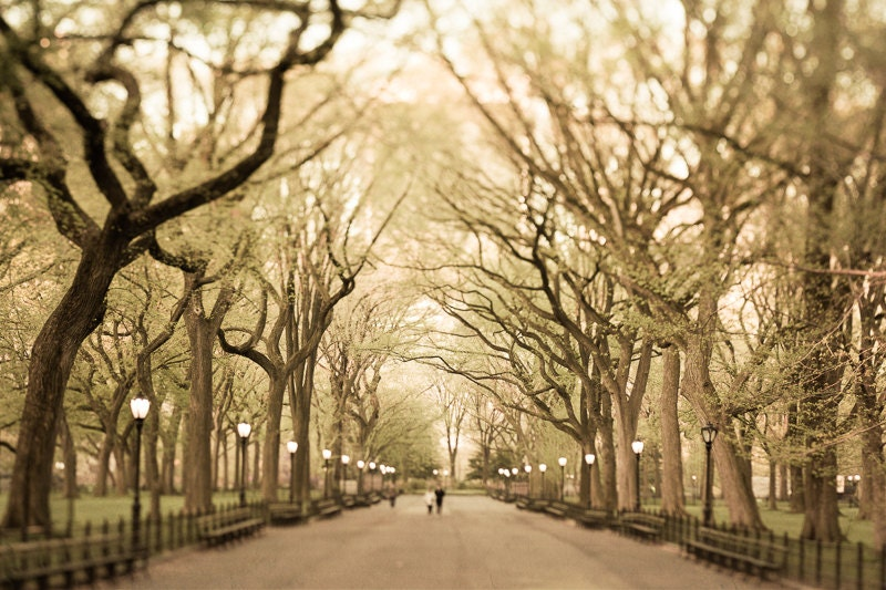 New York City, Large Wall Art, NYC Wall Art, New York Art Print, Autumn  Photography, Trees, Woods, Gold, Central Park Photo, Branches, Fall