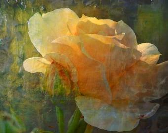 Vintage Inspired Florals, Retro Flower Art, Flower Photography, Flower Art Print,