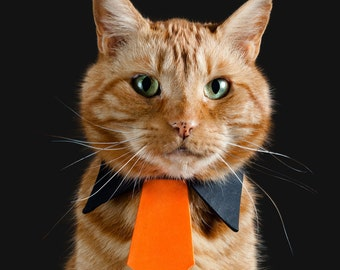 Festive Orange Necktie for Cats