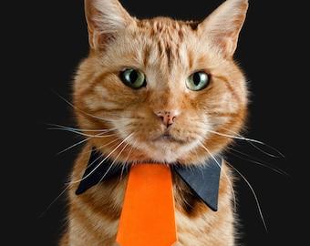 Festive Orange Necktie for Cats