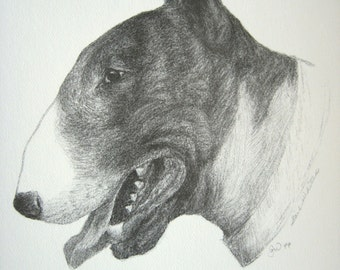 "Bull Terrier Dog Art Print from Original Charcoal Drawing Limited Edition Signed Numbered 8.5"" x 11"""