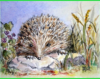 Hedgehog Exploring. Aceo print from my original watercolour illustration.